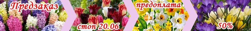 Цветы предзаказ