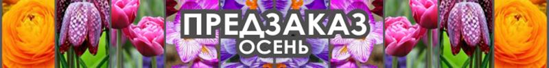 лукович